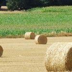 Mesures de soutien aux chefs d'exploitation agricole